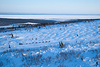 Sebastian Schnuelle on the trail in the hills between Elim and Golovin with the Bering Sea in the background during Iditarod 2009