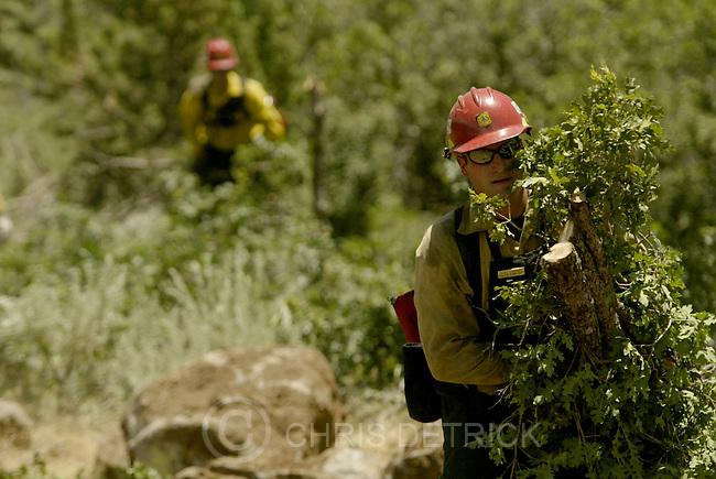 South of New Harmony, UT--27 Jun 2005--.Larry Kazakoff, of the Rogue Ridge Hot Shots out of Oregon, work to cut down and clear trees on the Blue Ridge fire line..**Pictures from the Blue Ridge fire to the west of I-15 and South of New Harmony.**.Chris Detrick /Salt Lake Tribune.File #816G5725