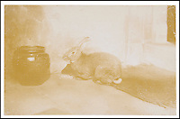 BNPS.co.uk (01202 558833)<br /> Pic: BenCavanna/DomincWinter/BNPS<br /> <br /> ***Please use full byline***<br /> <br /> This never-seen-before grainy photograph of a pet rabbit is the real life inspiration for Beatrix Potter's famous character Benjamin Bunny.<br /> <br /> The legendary children's author photographed her pet Belgian rabbit in the late 19th century, years before the release of her book 'The Tale of Benjamin Bunny'.<br /> <br /> She called the brown creature Benjamin Bouncer after she bought him from a pet shop in London.<br /> <br /> The 5.5ins by 3.5in card has now been sold by a descendant in the Mott family who inherited it for &pound;1,100 Dominic Winter Auctioneers of Cirencester, Glos.