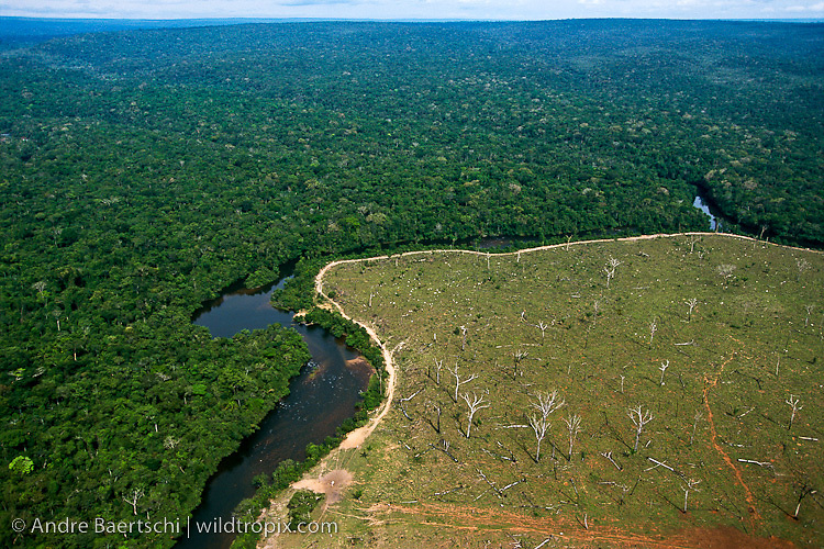 Deforestation for cattle breeding in Rondônia, Brazil, along the Bolivian border. Primary lowland tropical rainforest in Noel Kempff Mercado National Park, Santa Cruz, Bolivia, along the Rio Verde, a tributary of the Rio Iténez or Guaporé.