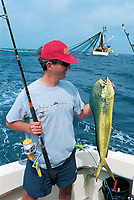 sport fishing, fisherman holds dolphin fish or dorado, Coryphaena hippurus Ecuador, Atlantic