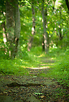 June 12, 2011:  Nature scenics in the Blue Ridge mountains, Virginia.