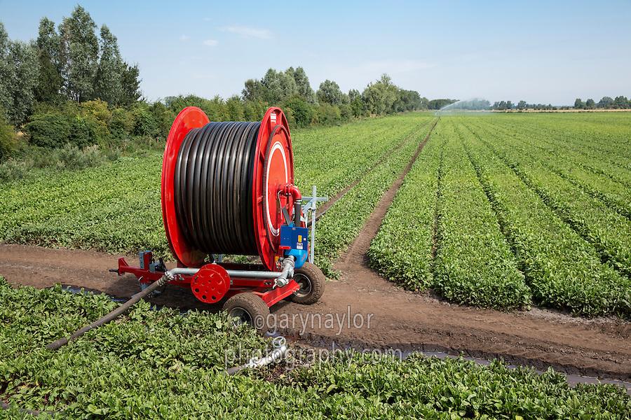 Irrigating beet root wth a Grimme reel and raingun - Cambridgeshire, July