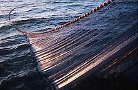 """Europe/France/Bretagne/56/Morbilhan/Quiberon: Pèche à la sardine sur le sardinier """"Kanedeven"""" détail du filet"""