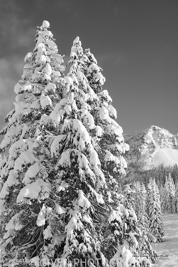Mountains and trees in winter, Mt. Baker National Forest, Washington