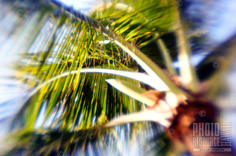 Palm tree blowing in the wind. Soft edges give a vintage, artistic feel.