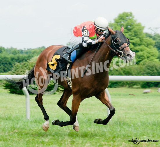 Tippie Tap winning at Delaware Park on 7/11/13