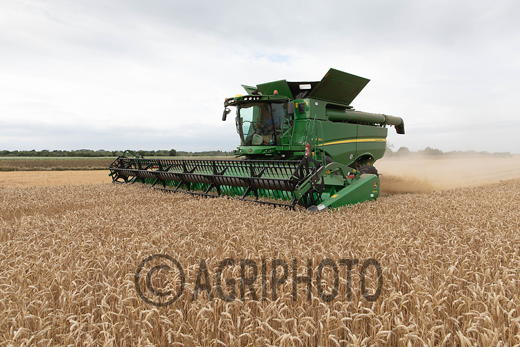 23.7.2020 Harvesting wheat in South Lincolnshire  <br /> ©Tim Scrivener Photographer 07850 303986<br />      ....Covering Agriculture In The UK.