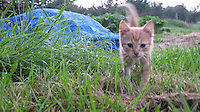 Cat at Villege Rural in Belgium