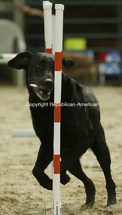 GOSHEN,  CT 17 September 2005 -091705BZ07- Pace, a labrador, goes through the weave poles on the agility course during a benefit at the Canine Sports Center Saturday afternoon.  The event was a benefit for area and regional animal rescue groups.<br />  Jamison C. Bazinet / Republican-American