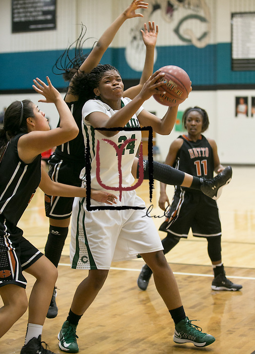 Connally's Aaliyah Reid gets pressured by Hutto Friday at Cougar Gym.  The Lady Cougars lost to the Hippos 54-42.  (LOURDES M SHOAF for Round Rock Leader.)