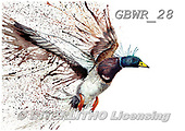Simon, REALISTIC ANIMALS, REALISTISCHE TIERE, ANIMALES REALISTICOS, paintings+++++KatherineW_SplatterMallard,GBWR28,#a#, EVERYDAY