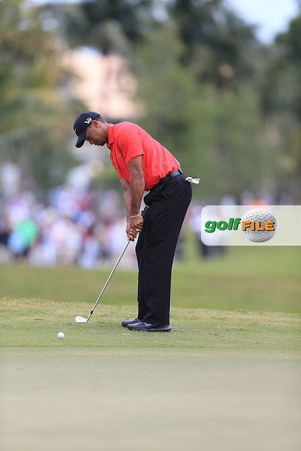 Tiger Woods (USA) on the first tee during the final day at the WGC Cadillac championship at Doral Golf Resort & Spa,Doral, Florida,USA..Picture: Fran Caffrey / www.golffile.ie ..