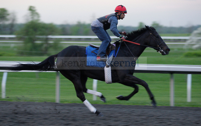 A horse during morning workouts at Keeneland Racetrack in Lexington, Ky., on Wednesday, April 4, 2012. Photo by Tessa Lighty   Staff