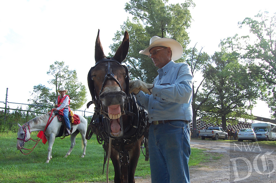 Jim Parker gets a mule ready Friday morning to pull a wagon in the John Henry Shaddox Wagon Train. This is the 37th year for the wagon train, which travels 71 miles over six days to arrive in Springdale just in time for the Rodeo of the Ozarks parade on Wednesday. Shaddox was Parker's father in law. Parker said he and his brother George have ridden in the wagon train every year since it began in 1977. Photo by Bill Bowden