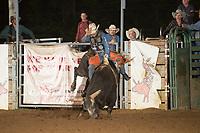 SEBRA - Gordonsville, VA - 6.10.2017 - Bulls & Action
