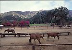 Horses at ranch on Catalina Island