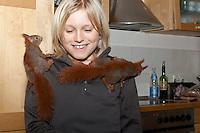 Eichhörnchen, Europäisches Eichhörnchen, verwaiste Jungtiere, Junge werden von Hand großgezogen, 2 Geschwister klettern auf Kind, Aufzucht von Wildtieren,  Sciurus vulgaris, European red squirrel, Eurasian red squirrel