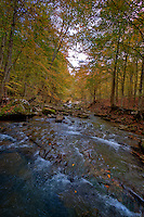 Smith Creek Preserve managed by The Nature Conservancy in Arkansas, dedicated its Smith Creek Preserve in Newton County in 2005. The 1,226-acre preserve lies above Sherfield Cave, where the largest colony of Indiana bats in the state hibernates each winter.  In addition, the preserve, which is also home to gray bats, black bears and elk, conserves the surrounding forest necessary for the Indiana bats' foraging and roosting needs, and it will help ensure the water flowing into the cave and the Buffalo River – the first national river in the U.S. – remains clean. The preserve also serves as an additional connection between the Ozark National Forest and the Buffalo National River Wilderness Area.