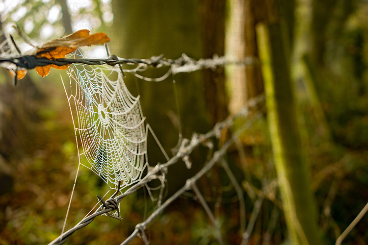 Spiders cobweb on a wire fence