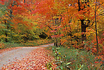 Gravel road and Fall foliage, St. Johnsbury, Vermont, USA