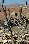 A plus de 100 km d'Opuwo, le centre administratif de la région, le campement Otjivahurua (?très loin? en himba) est installé au pied de la montagne Itindika.  Une dizaine de  petites huttes d'argile et de bouses se dressent autour du  ?kraal? , un corral central utilisé pour protéger le bétail des fauves pendant la nuit. Namibie. Afrique.Namibia; Africa