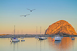 Gulls greet dawn at Morro Rock