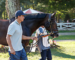Joyful Heart in the paddock as Opry (no. 8) wins the With Anticipation  Stakes (Grade 3), Aug. 29, 2018 at the Saratoga Race Course, Saratoga Springs, NY.  Ridden by  Javier Castellano, and trained by Todd Pletcher, Opry finished 1 1/2 lengths in front of Somelikeithotbrown (No. 7).  (Bruce Dudek/Eclipse Sportswire)