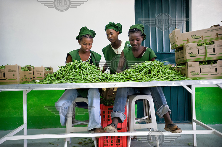Employees working at a partly Dutch-owned farm south of the capital, packing beans in the pack house before they are exported to The Netherlands.