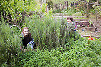 Children playing hide and seek in herb garden with rosemary and oregano