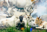 A Dinka boy lives in a cattle camp of thousands of cows near Rumbek, South Sudan.  The Dinka are traditionally nomadic pastoralists.