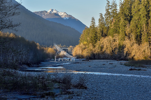 East Fork Quinault River Valley, Olympic National Park, Washington.  April.  Evening light.