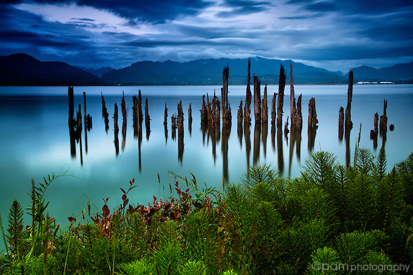 Old pier posts at Tillamook Bay