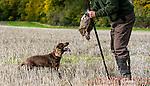 Cromer Hyde Farm Shoot - 14th October 2015  Richard Washbrooke Photography