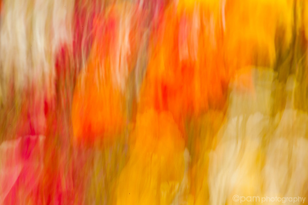 Colorful abstract of flowers in a garden bed