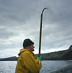 A salmon net fisherman in a coble at Armadale, Sutherland, fishing one of the bag nets. The fisherman was part of a crew of men who were one of the last remaining who caught wild Atlantic salmon using traditional methods. The fishery was one of the few remaining in Sutherland in the far north west of Scotland.