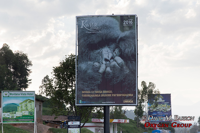 Gorilla Conservation Billboard