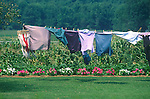 Clothesline in Centre County, PA. with flowers and corn in background. Sugar Valley.
