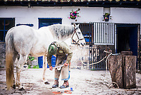 Stable man preparing a horses hooves at the horse stables, Hacienda Zuleta, Imbabura, Ecuador, South America