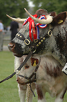 Three Counties Show general pictures.