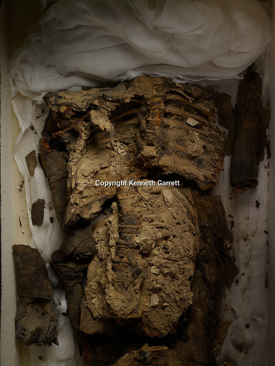 mm7864; 18th Dynasty; New Kingdom; Egypt, KV 21A, Tut 's wife, mother of fetuses, Ankhesenamun
