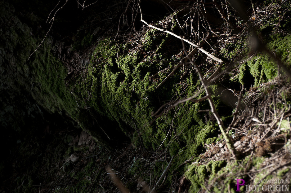 Beams of sunlight lit the moss covered tree trunk. The green color of the moss alone is highlighted even in a partial black and white fine art photo.