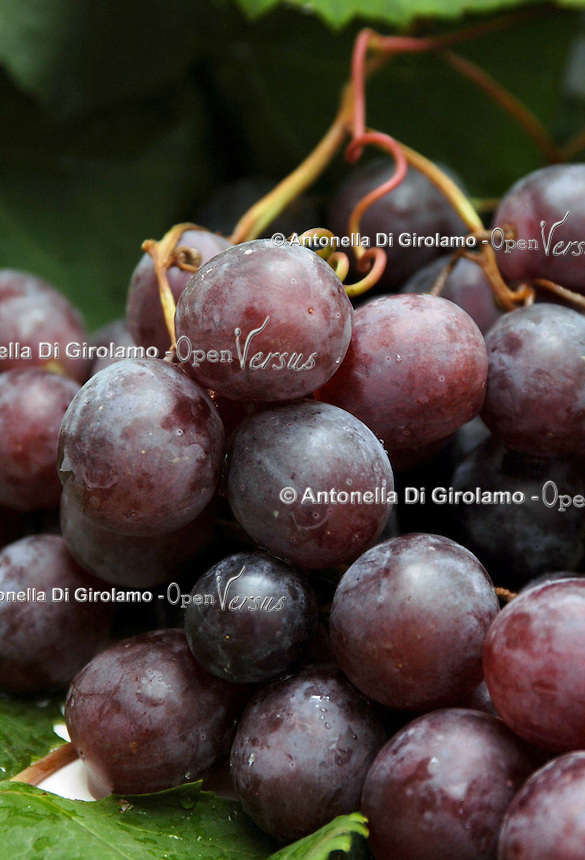 Grappoli di uva da tavola..Bunches of table grapes...