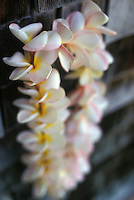 Plumeria leis, a beautiful and fragrant Hawaiian tradition