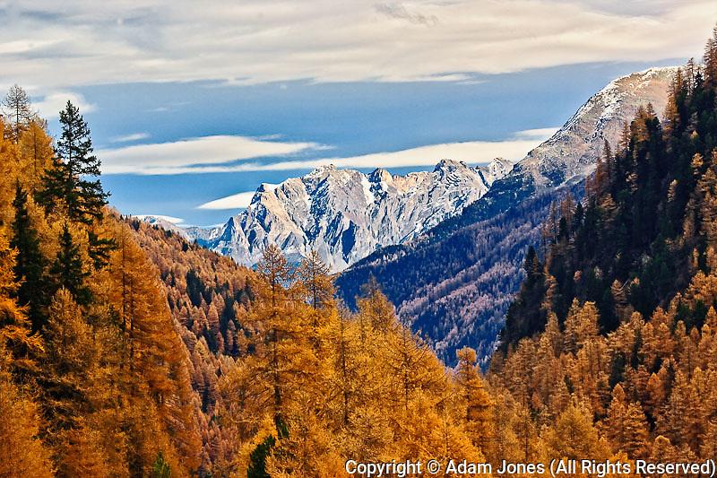Winding road and Larch (Larix europaea) trees in autum, Alps, Switzerland