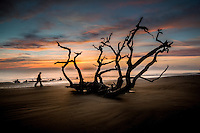 Driftwood Beach on Jekyll Island Georgia, is a tree graveyard creating amazing ocean views at sunrise.