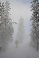 -33 below at Old Faithful. I love the mystic feel of this and disproportional differences in size between to the person and the trees. Nice composition!
