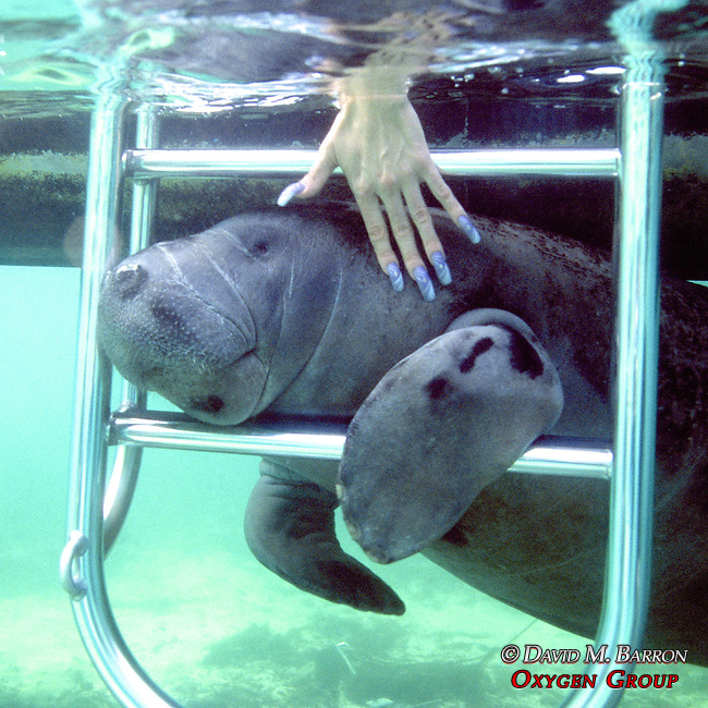 Manatee Ladder & Womans Hand