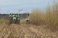 Harvesting willow, Wingate, Co. Durham. The crop is to be used by Wilton 10, a 30 MW wood powered power station on Teeside. The power station will use 300,000 tonnes of wood annually of which some 50,000 tonnes will be short rotation coppice (SRC) willow. The other wood supply will be recycled timber, timber processing products and forestry products..To grow 50,000 tonne of SRC  3,000 hectares has to be planted.. Benefits of SRC from the farmers point of view is that once established it does not need replanting each year. When harvested the trees grow again from the remaining root stock. Fertiliser and chemical input is low compared to growing cereals.