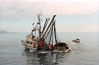 Salmon seiner, the F/V Monk's Habit, fishing off Kodiak Island, Alaska